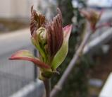 春のお出かけセット4