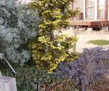 植物(ナチュラル&オーダーメイドの庭・外構ガーデンハーモニー)