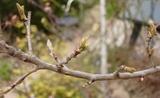 春のお出かけセット10