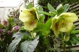 木陰でひっそり咲きます(ナチュラル&オーダーメイドの庭・外構ガーデンハーモニー)