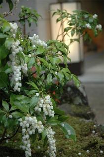 岩惣の植物 初夏