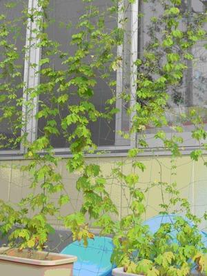 北雀宮保育園②
