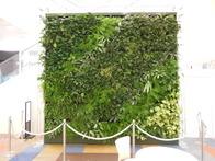 greenwall2