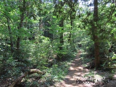 20200821 林の小道 bwnIMG_5058