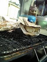 牡蠣覗いております♪