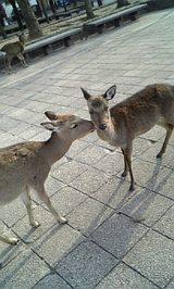 鹿さんの内緒話☆