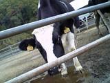 牛さんパート2