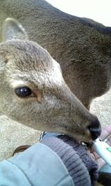 小鹿さぁぁん