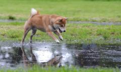 子供がいる家庭でも飼いやすい!オススメの犬種とその理由