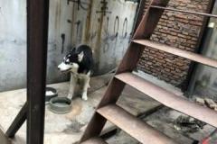「食用犬肉禁止法」、世論調査で「賛成40%、反対51%」と韓国紙、依然として根強い伝統の食文化支持