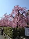 南禅寺裏野村美術館