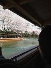 岡崎桜回廊十石舟