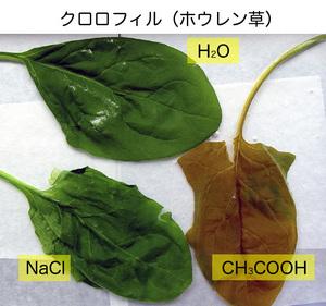 食実_ホウレン草2