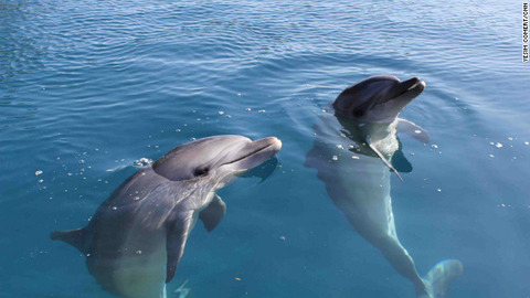 animal-bottlenose-dolphin