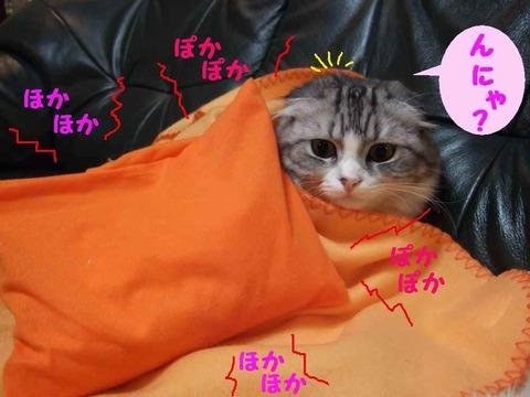 ゆたぽん-DSCF8765_convert_20081108173614