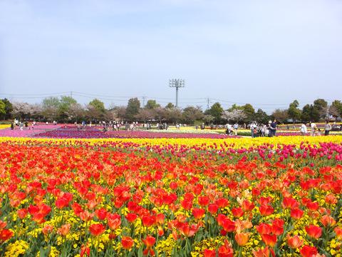 sozai_pic0045