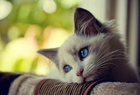 猫-o0500033813666886586