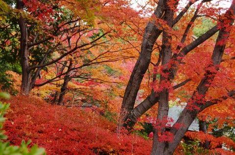 白鳥庭園②