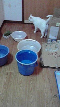 真夏の部屋の猫たち