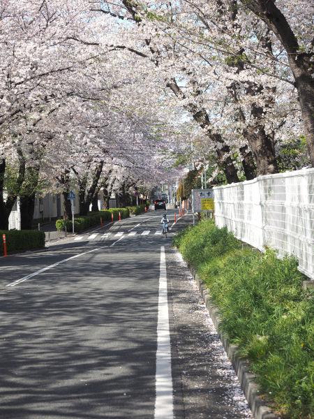 oyako_ride_01