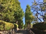 2016.10羽根木公園イチョウ01