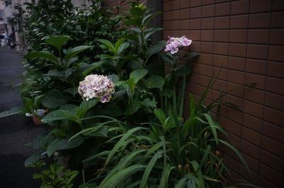 leica-m_summaron_35mm-sony_a7
