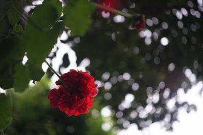 ernst_ludwing_meritar_50mm_exakta-sony_a7