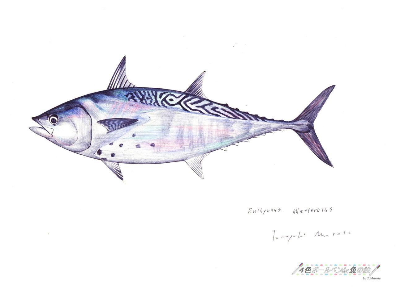4色ボールペンde魚の絵 by T.Mur...