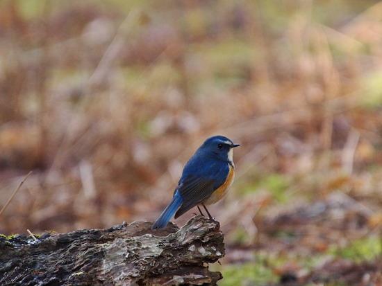 奈良公園で野鳥