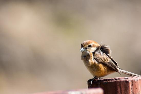 野鳥好きおっさん同好会発足