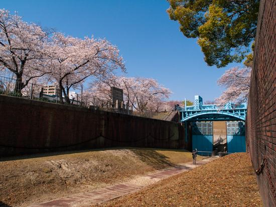 毛馬閘門と桜