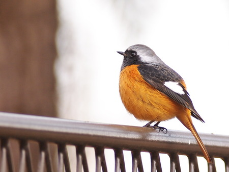 大阪城冬の鳥