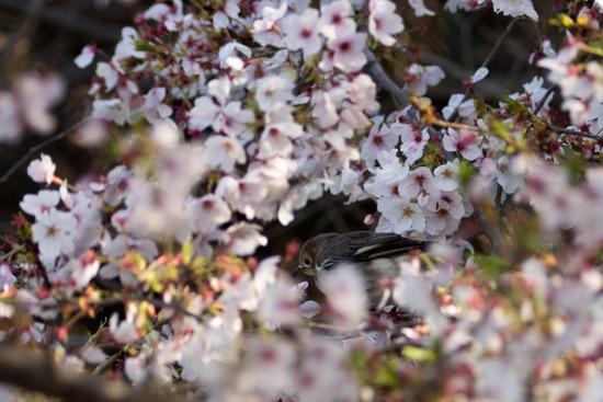 春一番(初物的な意味で)