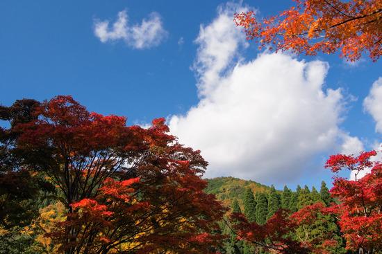色づくお山