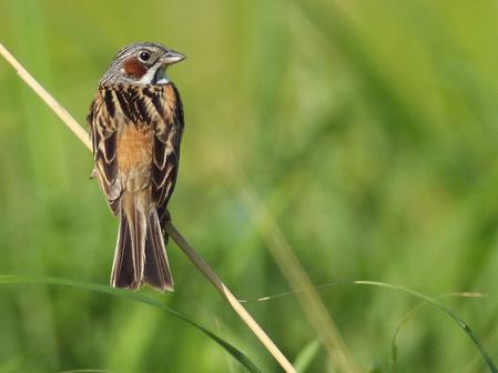 曽爾の野鳥たち
