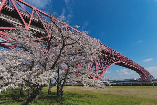 桜の2019