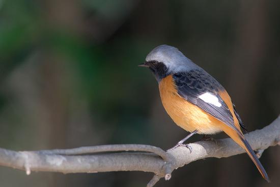 サンヨンで鳥撮り