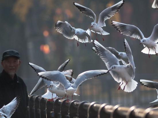 大阪城で鳥見