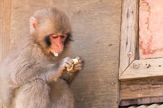 お猿その3