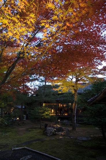 高台寺ライトアップ2014