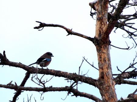 金剛山の野鳥