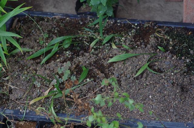 下段の育苗箱