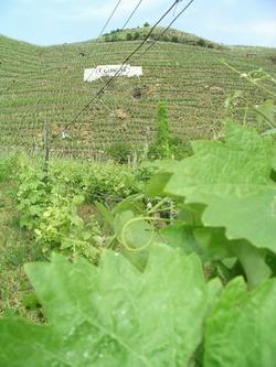 ワイン畑 ギガル