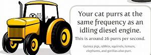 ご機嫌の猫は1秒に26回のどを鳴らします