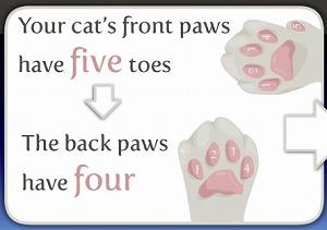 猫は前足と後ろ足で肉球の数や配置が違います