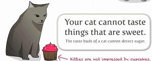 猫は甘いものに興味がありません