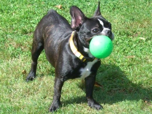 ボール好きだなぁ