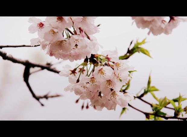 桜2017&4月ブヒ会のお誘い