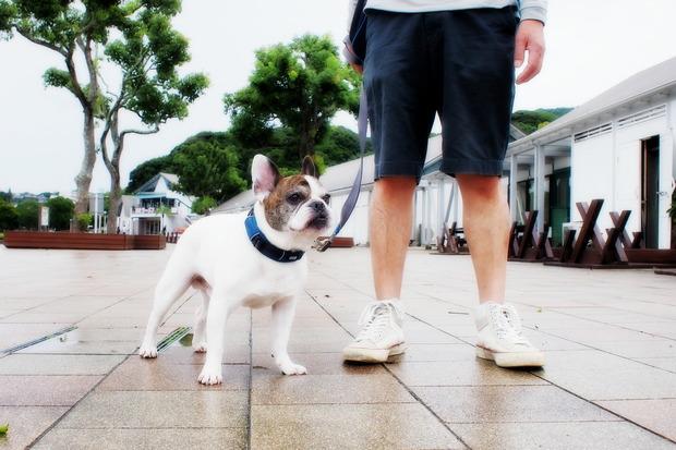 9月ブヒ会のおしらせ&台風前に散歩