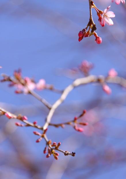 春マルシェ 有田泉山